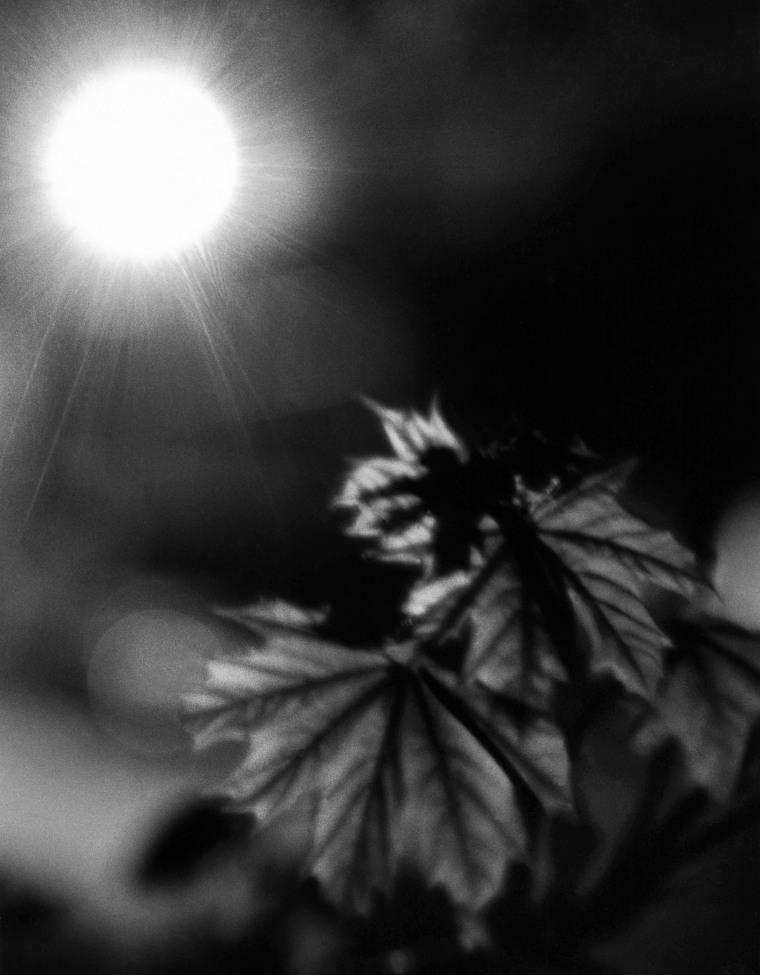 Leaves By Streetlamp