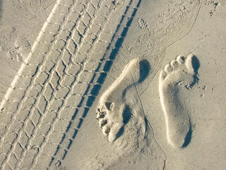 Footprints & Tire Tracks in Sand