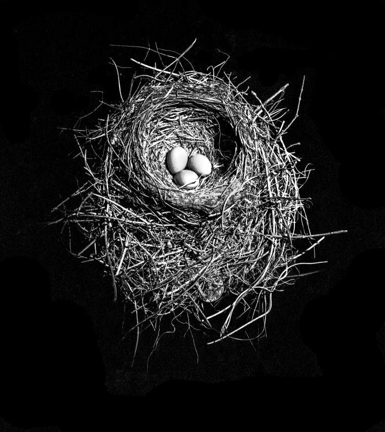 Three Eggs In A Nest